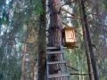 Ловушка роя на дереве